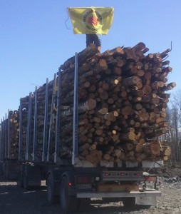 Activists stop loggers clearing nuclear reactor site. Photo by Tiina Prittinen.